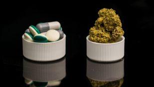קנאביס-ותרופות-לכאב.-אילוסטרציה